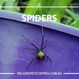 Pest Control Sydney Spiders