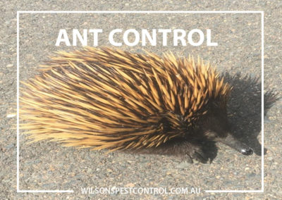 Pest Control Blacktown - Ant Control