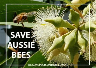 Pest Control Blacktown - Aussie Bees
