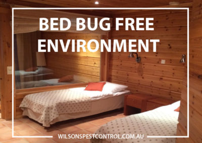 Pest Control Blacktown - Bed Bug Free Environment