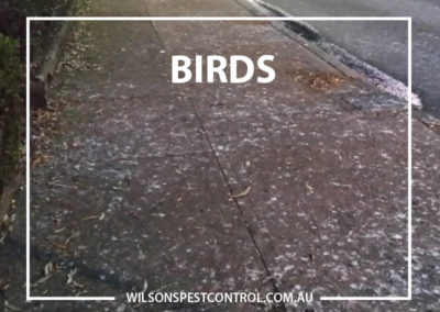 Pest Control Blacktown - Bird Droppings