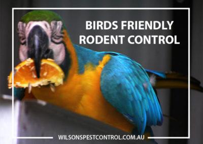 Pest Control Blacktown - Bird Friendly Rodent Control