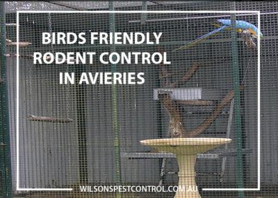 Pest Control Blacktown - Birds Avieries