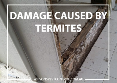 Pest Control Blacktown - Damage by Termites