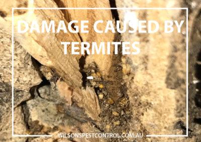 Pest Control Blacktown - Damaged Structure Termites