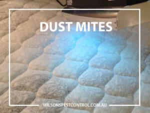 Pest Control Blacktown - Dust Mites