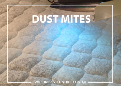 Pest Control Blacktown - Dust Mites
