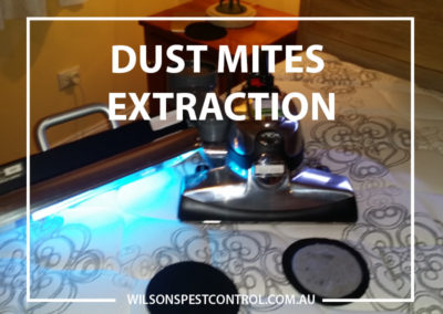 Pest Control Blacktown - Dust Mites Extraction