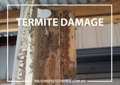 Pest Control Blacktown - Extensive Termite Damage
