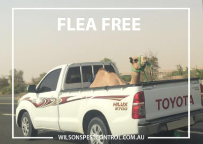 Pest Control Blacktown - Flea Free Environment