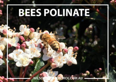 Pest Control Blacktown - Food Source Keep our Bees Alive