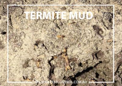 Pest Control Blacktown - Mud Termites