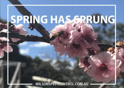 Pest Control Blacktown - Spring has Sprung
