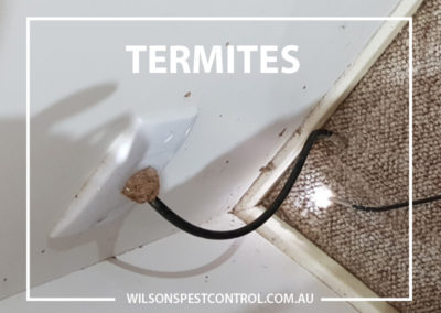 Pest Control Blacktown - Termite Bait