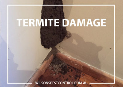 Pest Control Blacktown - Termite Damage Bedroom