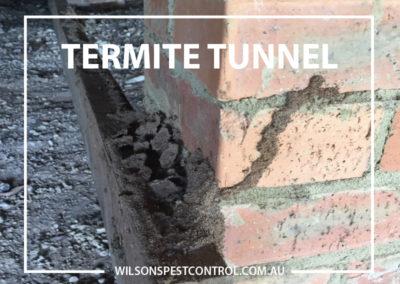 Pest Control Blacktown - Termite Tunnel