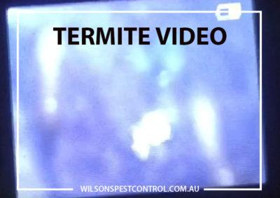 Pest Control Blacktown - Termites Video