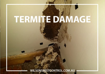 Pest Control Blacktown - Termites in Wall