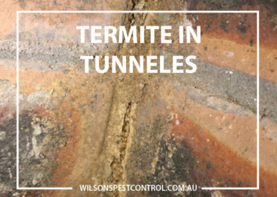 Pest Control Blacktown - Termites in tunnels