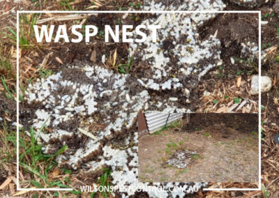 Pest Control Blacktown - Wasps in Compost