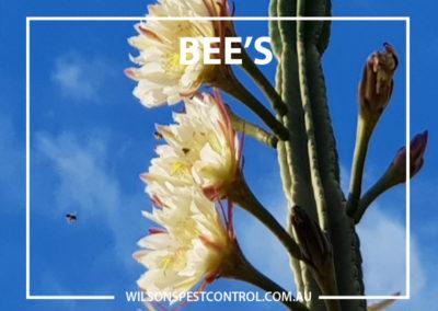 Pest Control Castle Hill - Bees