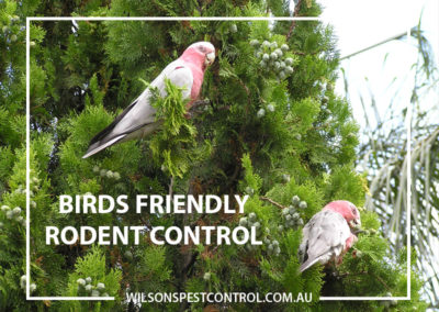 Pest Control Castle Hill - Bird Friendly Rodent Control