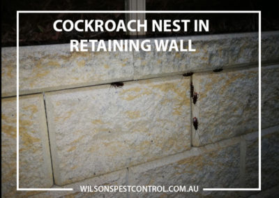 Pest Control Castle Hill - Cockroach Nest in Retaining Wall
