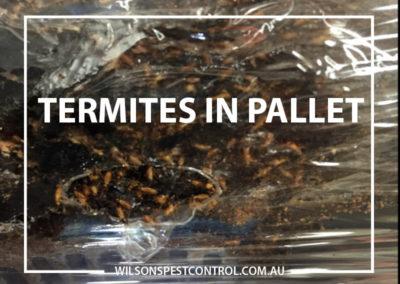 Pest Control Castle Hill - Pallets Termites