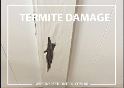 Pest Control Castle Hill - Termite Damage Domestic