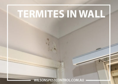 Pest Control Castle Hill - Termites In Wall