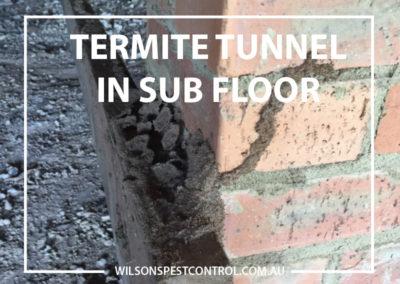 Pest Control Castle Hill - Termites in Sub Floor