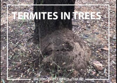 Pest Control Castle Hill - Trees Termites