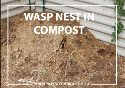 Pest Control Castle Hill - Wasp Nest in Compost