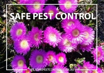 Pest Control Penrith - Safe Pest Control