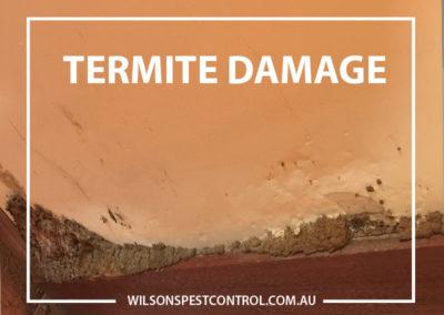 Pest Control Penrith - Termite Damage