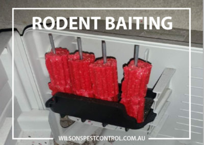 Pest Control Sydney - Bait