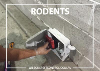 Pest Control Sydney - Discrete Rodent Box