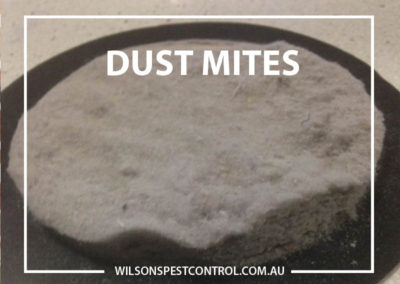 Pest Control Sydney - Dust Allergy