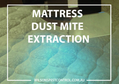 Pest Control Sydney - Dust Mite Extraction