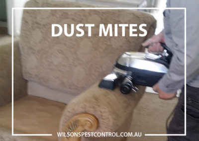 Pest Control Sydney - Furniture