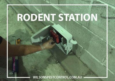 Pest Control Sydney - Rodent Station