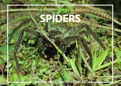 Pest Control Sydney - Spiders in the Garden