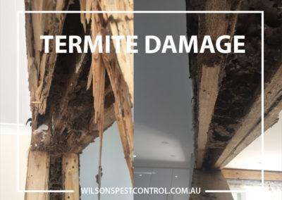Pest Control Sydney -Termite Damage Door
