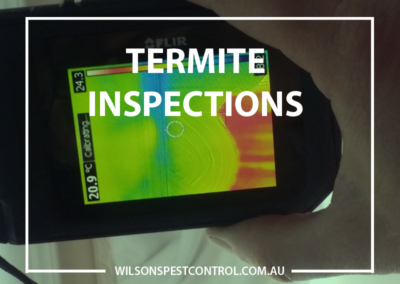 Pest Control Sydney - Termite Inspections