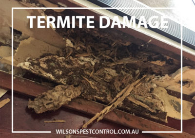 Pest Control Sydney -Termite Stairs Damage