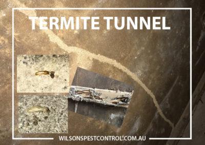 Pest Control Sydney - Termite Tunnel