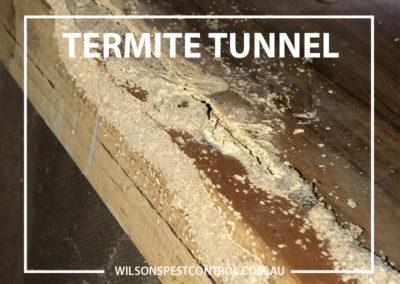 Pest Control Sydney - Termite Tunnelling
