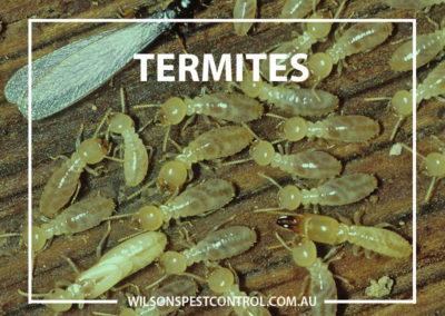 Pest Control Sydney - Termites