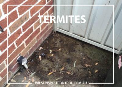 Pest Control Sydney - Termites Treatment