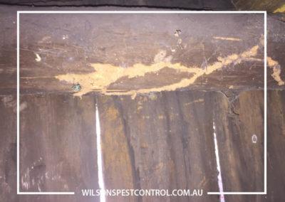 Pest Control Sydney - Tunnels
